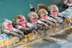 お猿さんと温泉