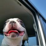 愛犬やペットにフィットするホンダ車!フィット&シャトル!