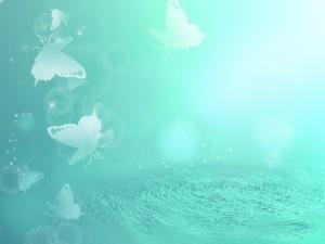 水辺のモルフォ蝶